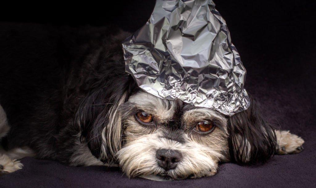 Собака з капелюха інфографіки